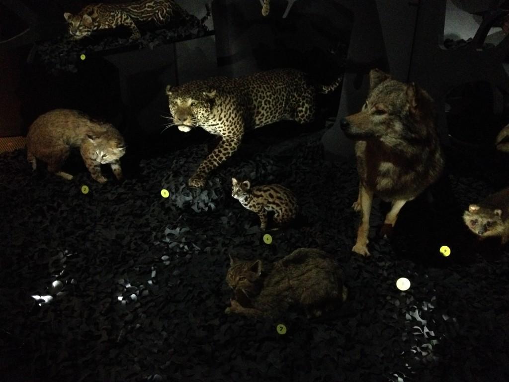 animaux nocturnes musée