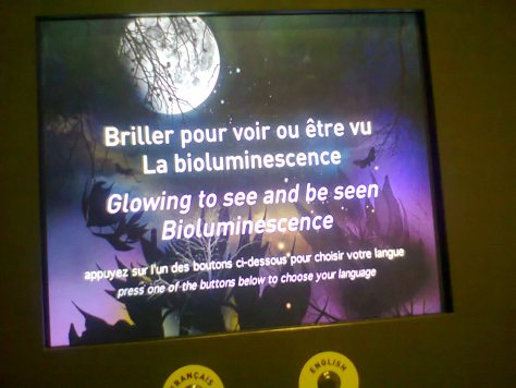 Jeu interactif sur la bioluminescence