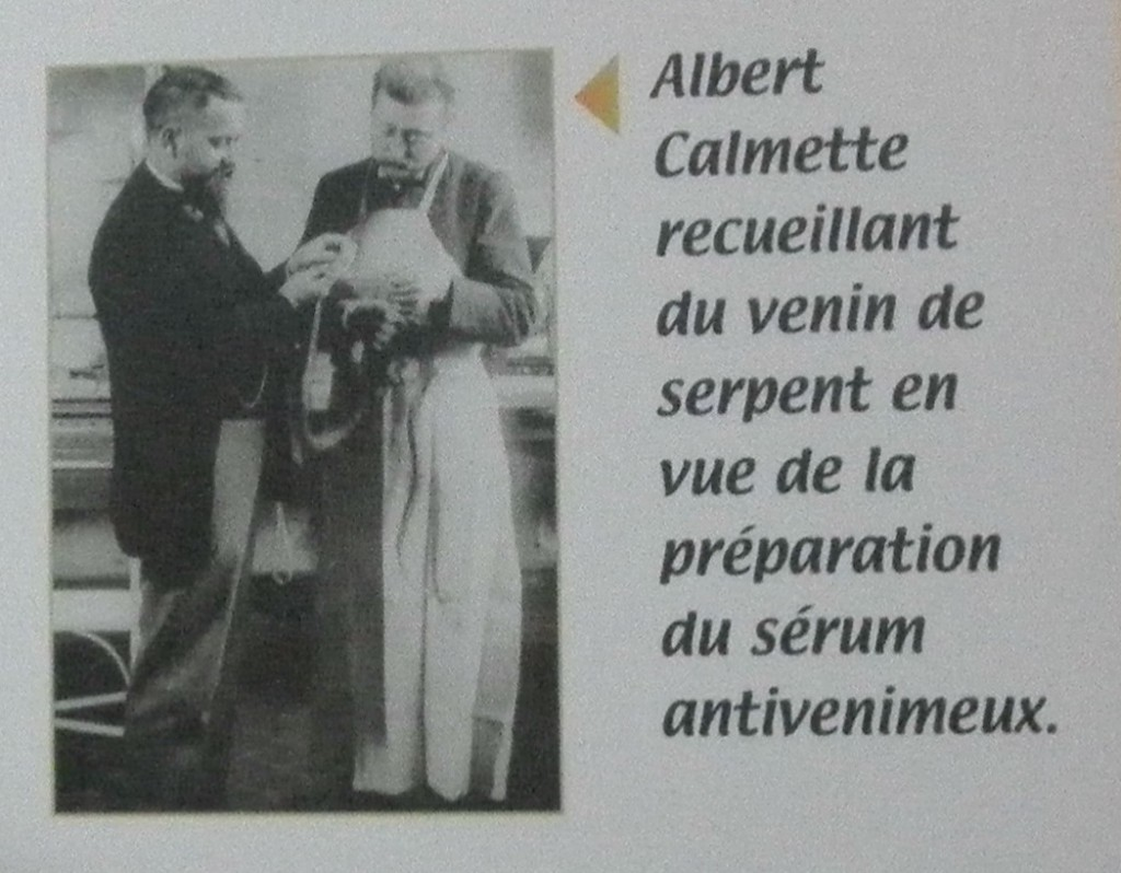 albert calmette serum venimeux serpents