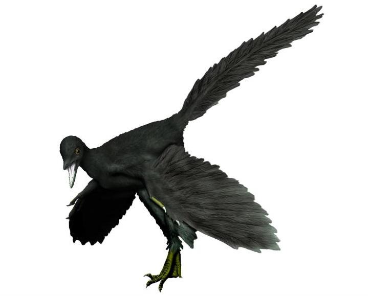 Archaeopteryx_black_nobackg_NT2