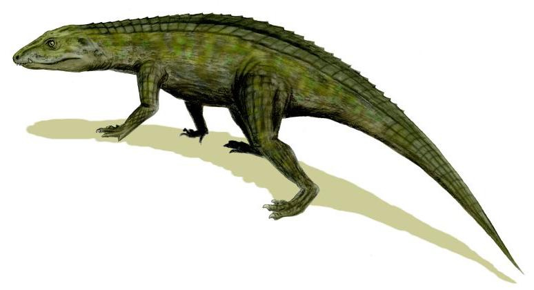 Protosuchus_BW